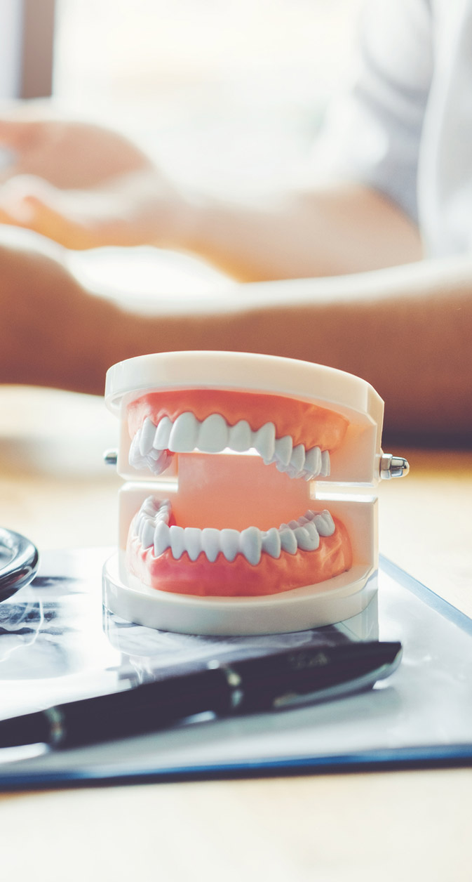 A model of a mouth sits on a desk while a trustworthy dentist goes over dental care services and options